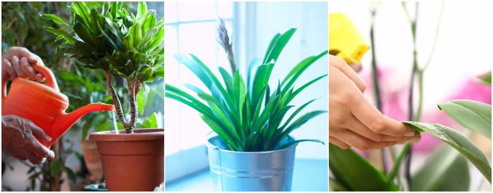Sex goda råd hur du får krukväxterna att må bra i vinter.