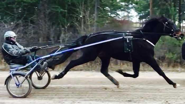 Här tränar Jan-Åke Hoas häst igen.