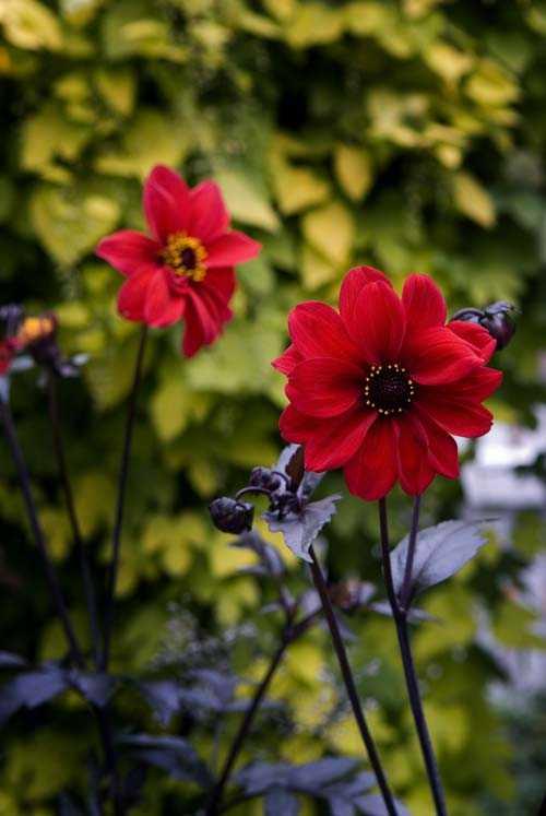Britt-Marie påtar gärna i trädgården...