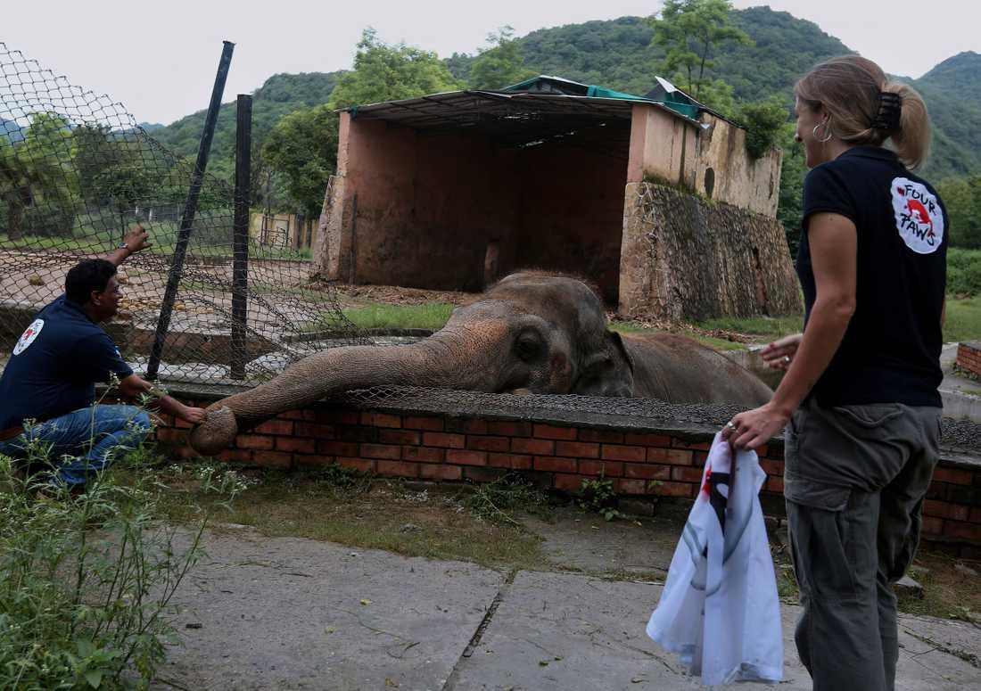 Veterinärer från djurrättsorganisationen Four Paws klappar om elefanten Kaavan på Marghazar zoo i Islamabad. Bilden är från den 4 september.
