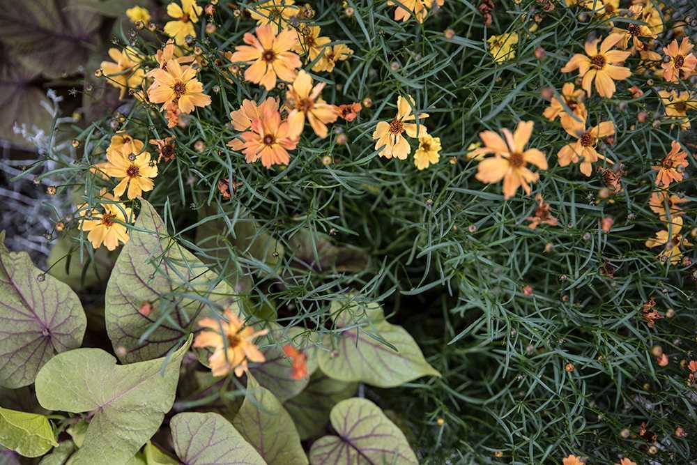 Höstrabatten bygger på bladväxter med enstak färgprakt.