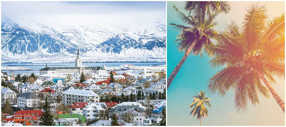 Två palmer ska pryda ett bostadsområde på Island.