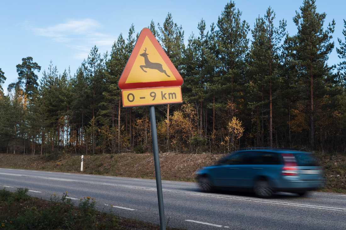 Nu är det högsäsong för vilt på vägarna, varnar SOS International. Arkivbild.