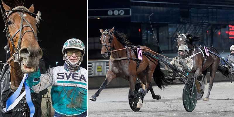 Hawk Cliff är en, av flera, spikförslag som Sportbladets expert Per Nicklasson rekar inför onsdagens V86-omgång på Solvalla och Åby.