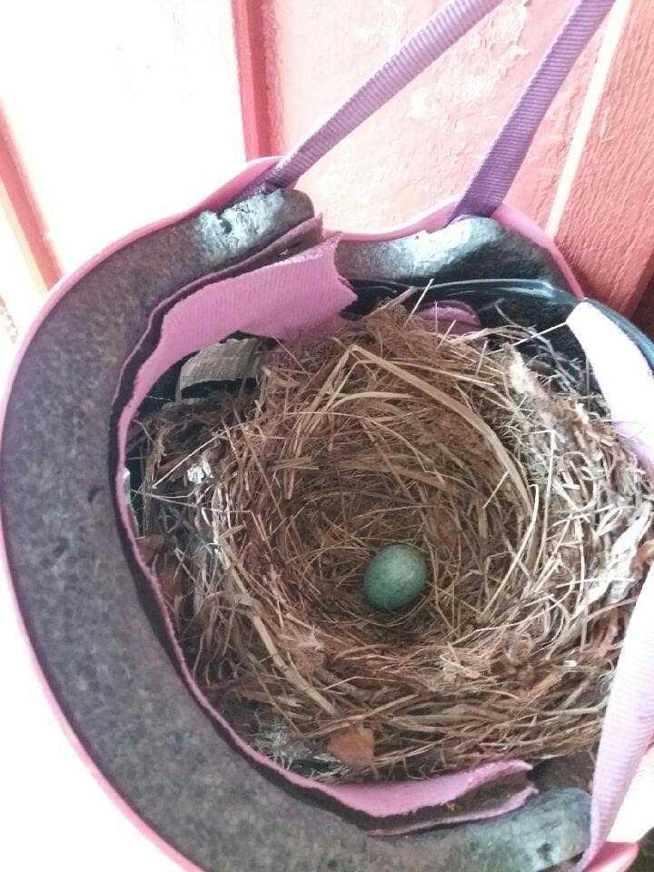 En koltrast la ägg i Elinas cykelhjälm.