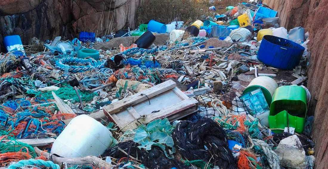 Plastskräp rensat från Bohuskusten.