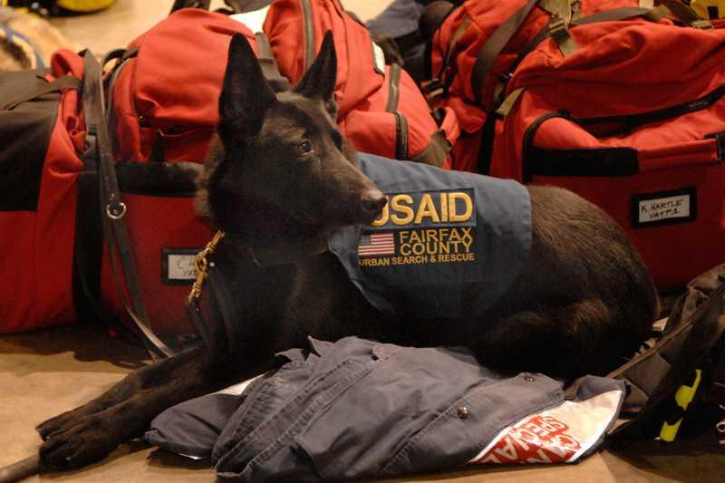 En amerikansk spårhund är redo att åka till Haiti och söka efter människor i rasmassorna.