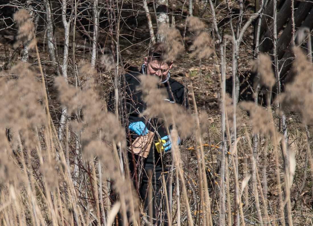 Norsk polis märker ut en plats i skogen runt försvunna Anne-Elisabeth Hagens hem. Bilden tagen i april.
