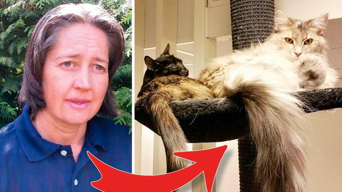 """""""Precis när jag höll på att somna kom räddningstjänsten och bar ut mig"""", säger Alexandra som nu sörjer sina katter."""