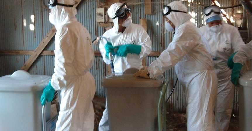 Kycklingar i japan avlivas för att förhindra spridning av den förra fågelinfluensan.