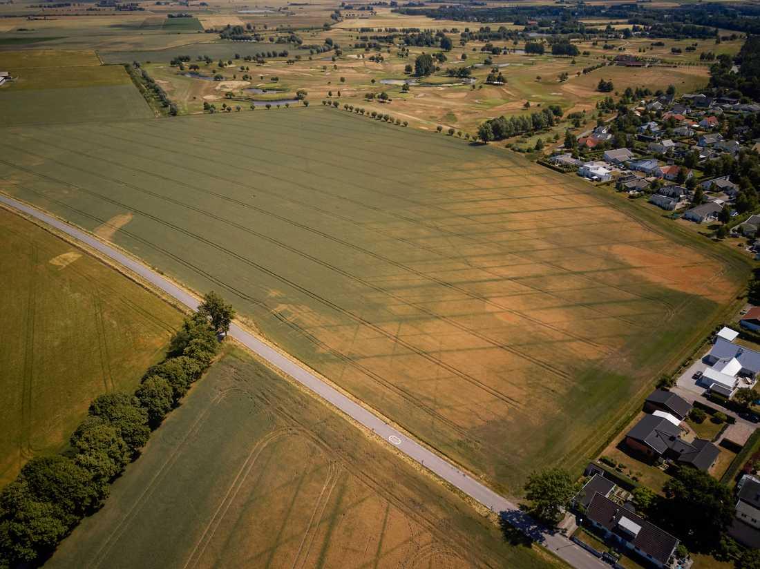 Lantbrukare kan komma att få ekonomiskt stöd från staten efter den senaste tidens torka. Arkivbild.