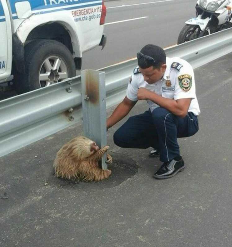 Sengångaren togs till veterinär.