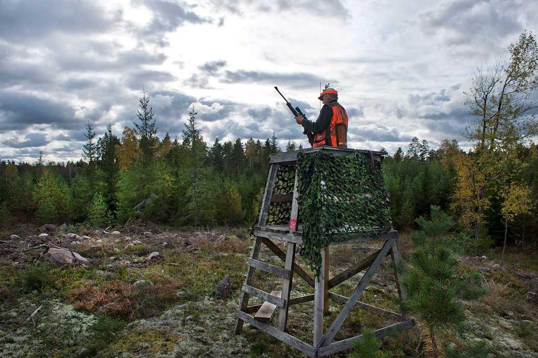 Sverige har 300 000 jägare.