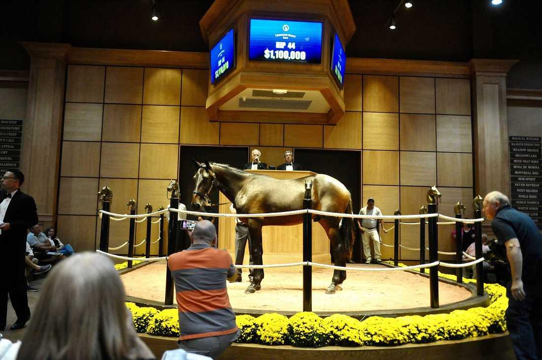 Ettårige Maverick, en helbror till superhästen Greenshoe, såldes för 1,1 miljoner dollar i USA natten mot onsdagen. Därmed är hästen den dyraste ettåringen som någonsin sålts på auktion. Köpare: kanadensiske affärsmannen Brad Grant.