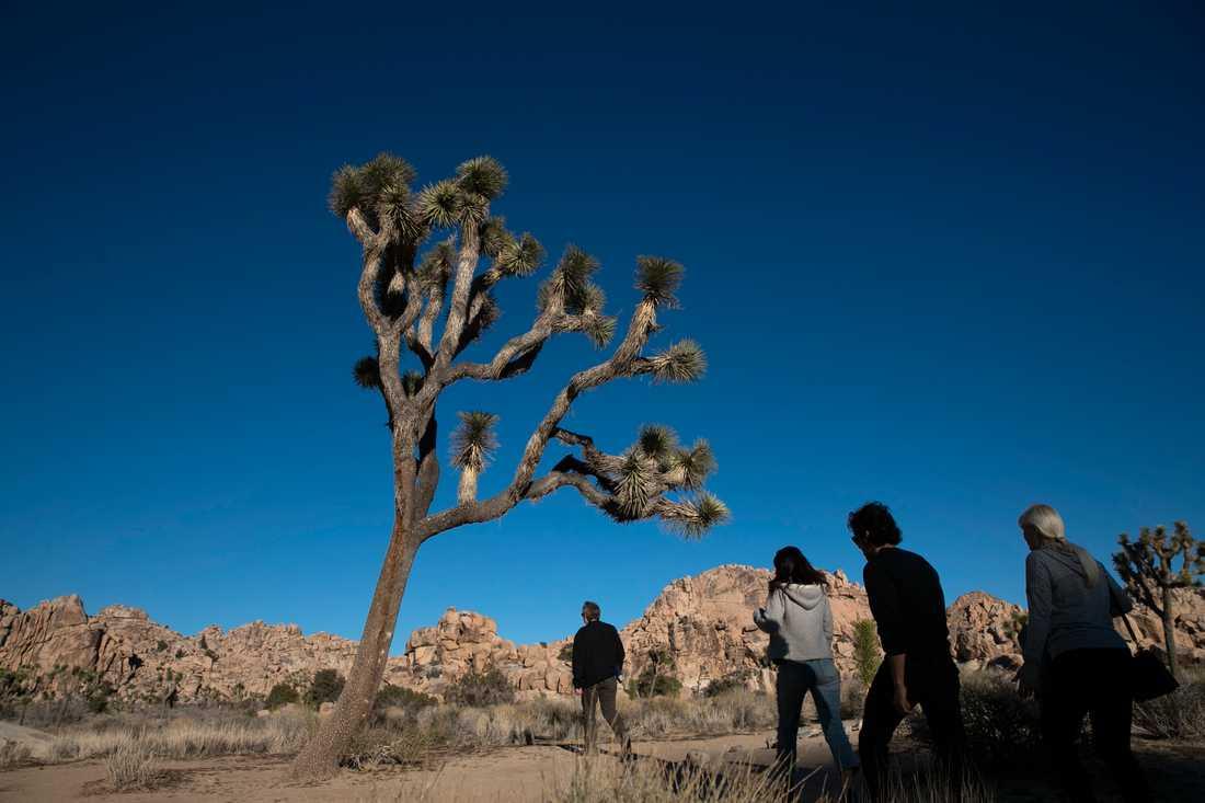 De allra flesta som besökte nationalparken Joshua Tree i Kalifornien under den rekordlånga nedstängningen av delar av USA:s statsapparat skötte sig. Men andra vandaliserade området, enligt företrädare för parken.