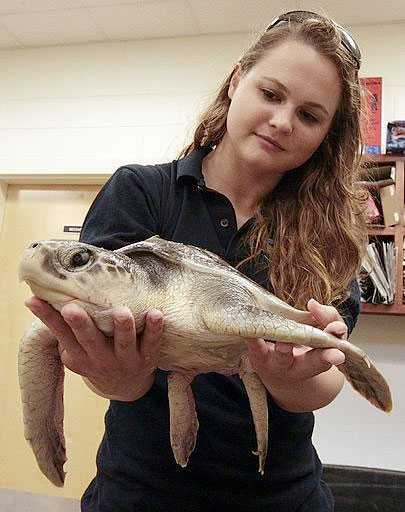 En jättesköldpadda som skadats av oljesutsläppet.