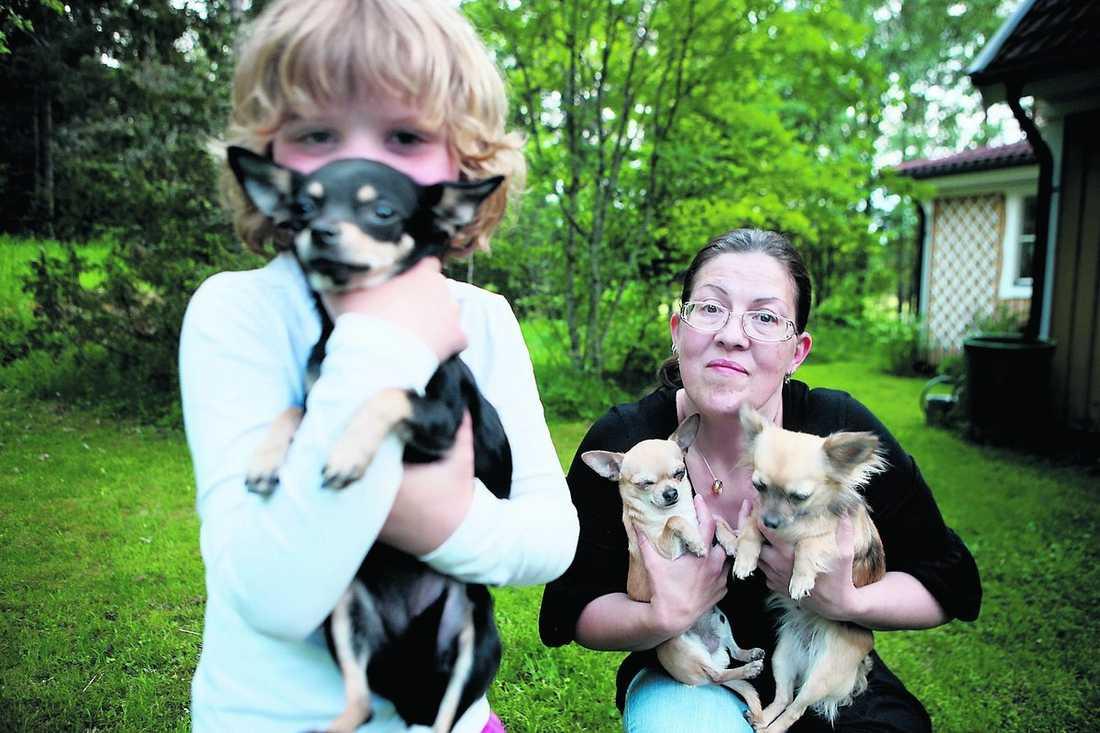 """UPPRÖRD Monique Nilfors, här med dottern Linnea och hundarna, Sniff, Tjorven och Brumma, är engagerad i Chihuahua-cirkeln. """"Det är fruktansvärt hur de behandlas under transporten"""", säger hon."""