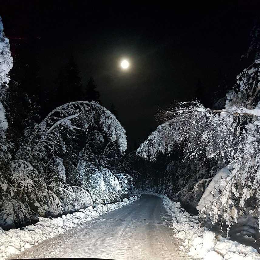 En vintrig bild.