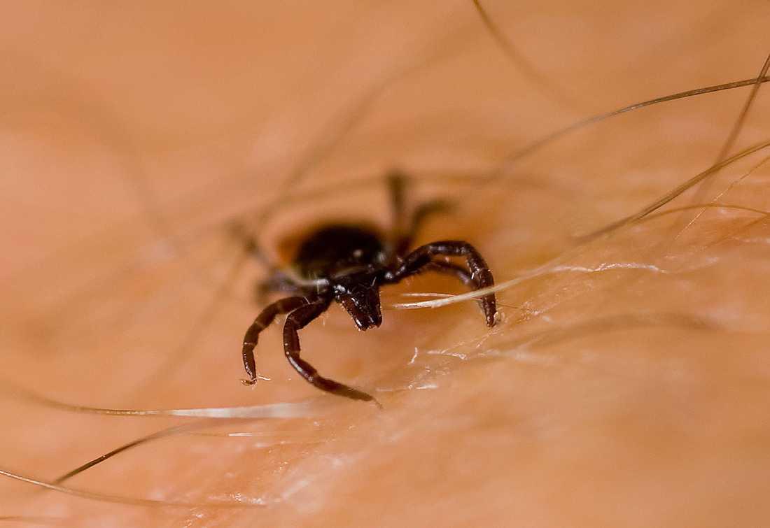 Fästingar sprider fler farliga sjukdomar än man tidigare trott, enligt ny forskningsrapport.