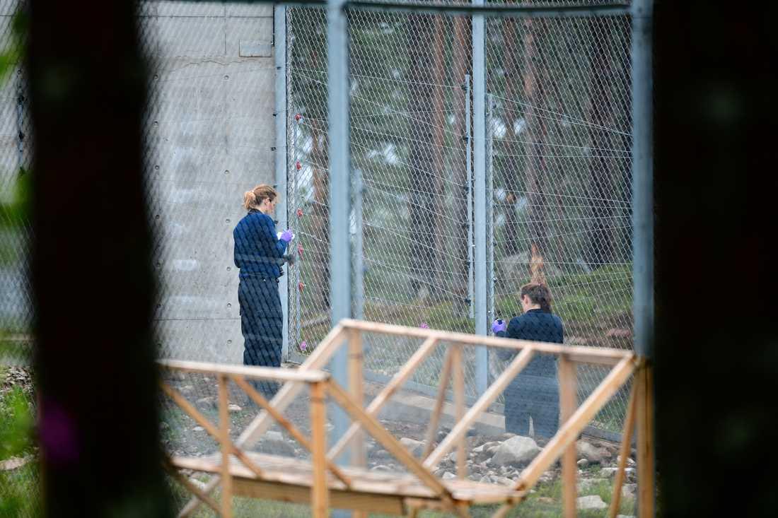 Polisens tekniker undersöker hägnet.