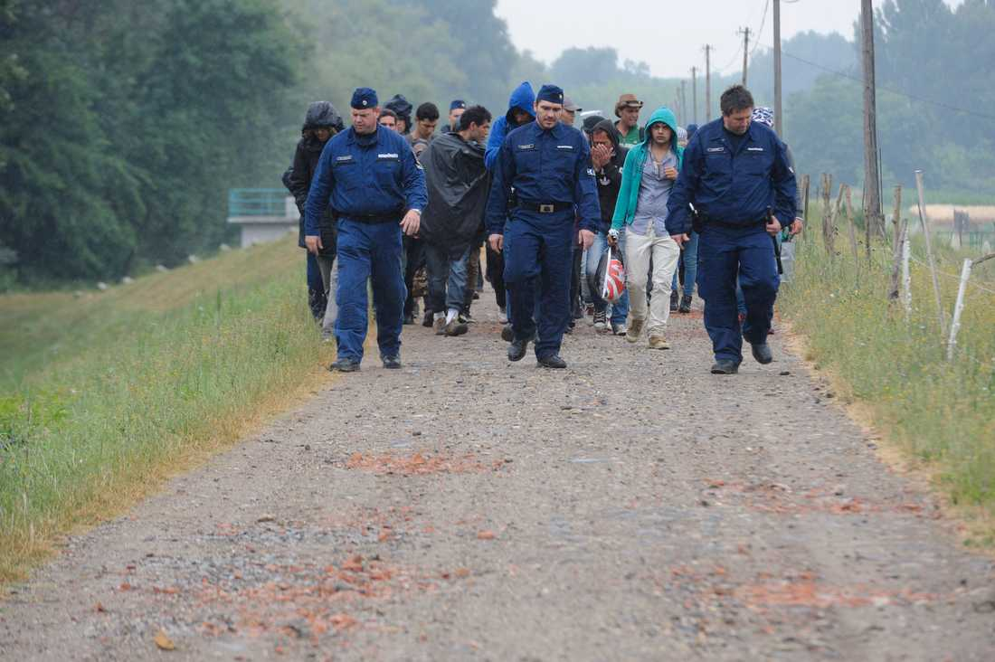 Ungersk polis eskorterar migranter.