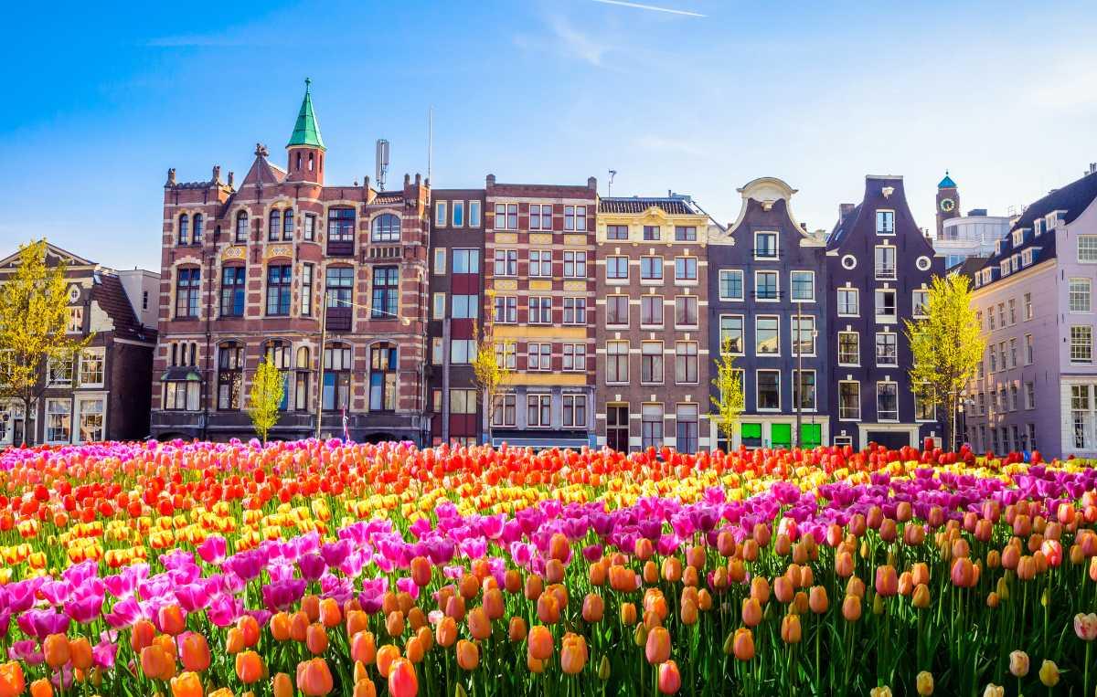 Njut av tulpanerna i Amsterdam.