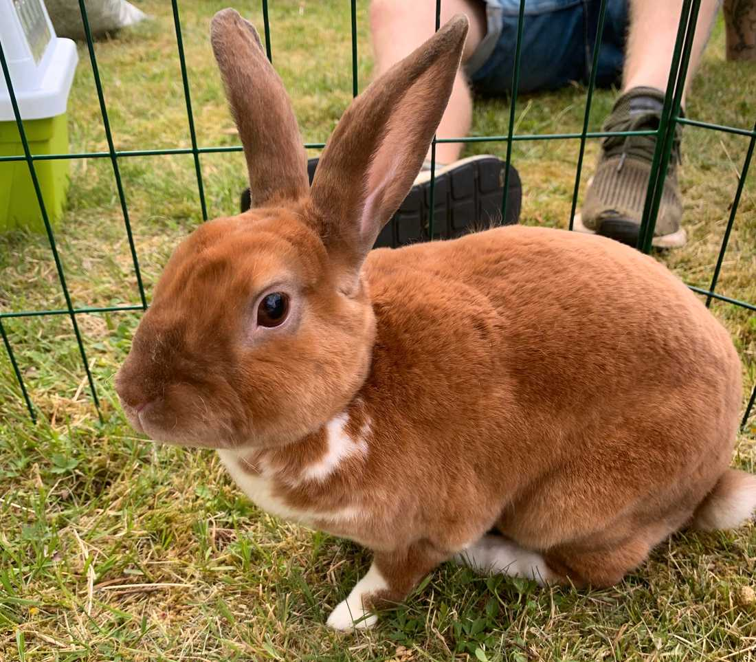 Kaninen Qira.