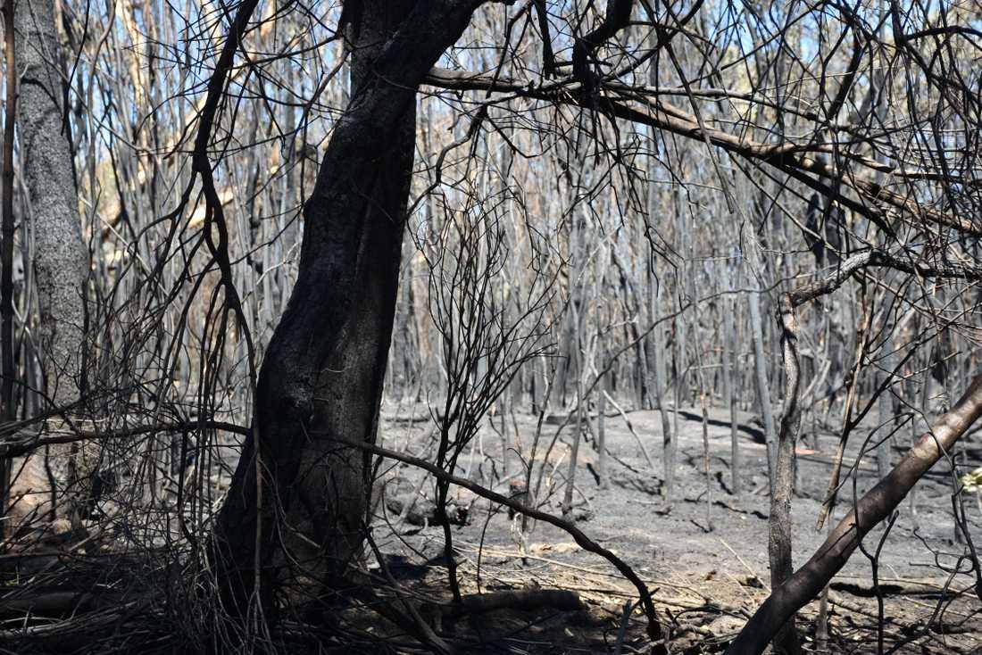 Utbränd skog efter en av bränderna i Australien. Arkivbild.