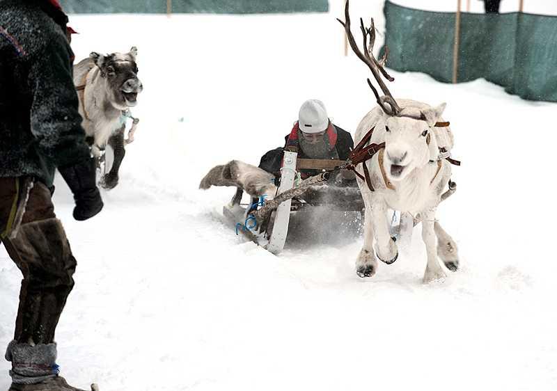Partiledare på glid - och två glada renar... (Klicka på bilden för större format)