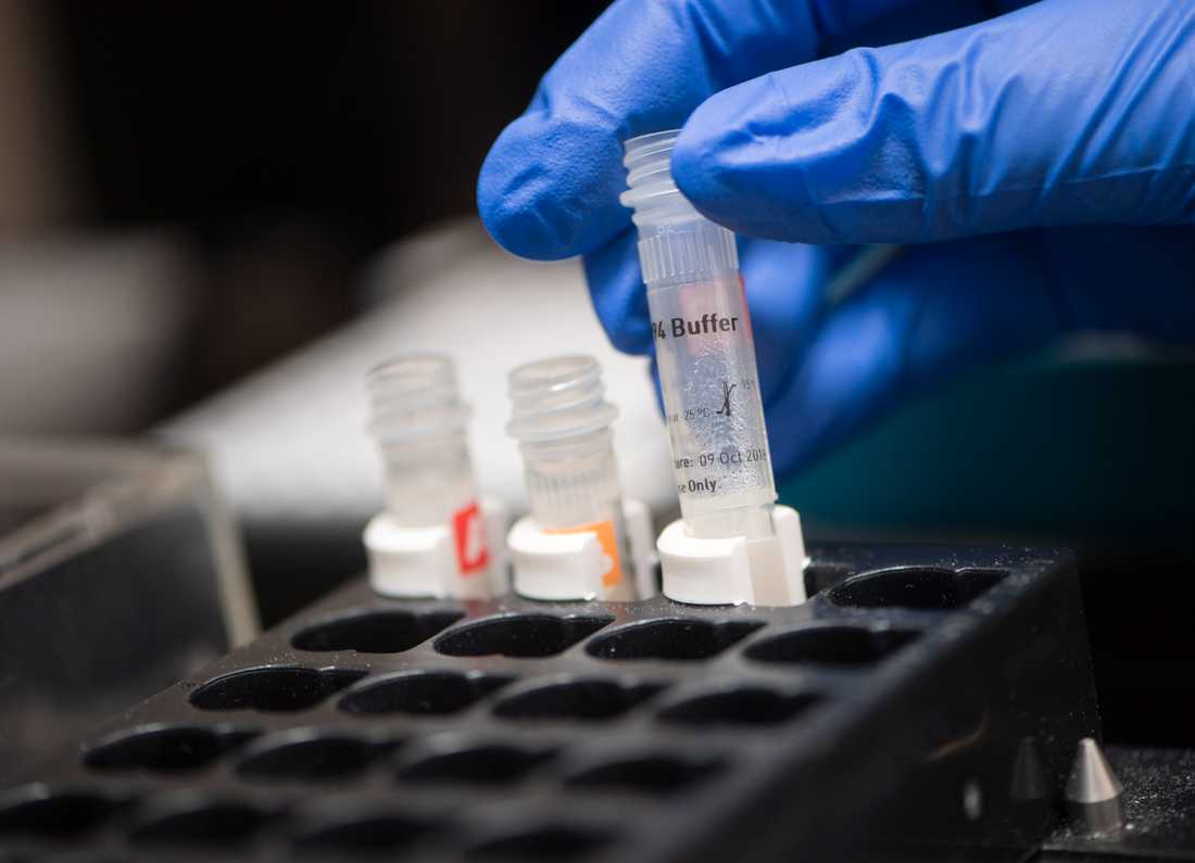 En labbingenjör förbereder en pipetteringsrobot med PCR-plattor för analys av coronaprover. Arkivbild.