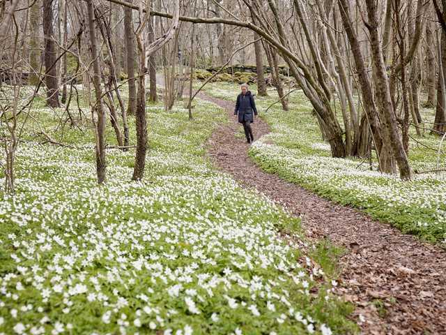 De flesta av oss längtar till våren men för en del innebär skiftet i årstiden att de drabbas av en vårdepression.