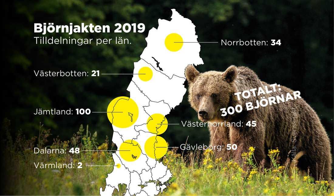 Totalt 300 björnar får fällas den här jaktsäsongen.