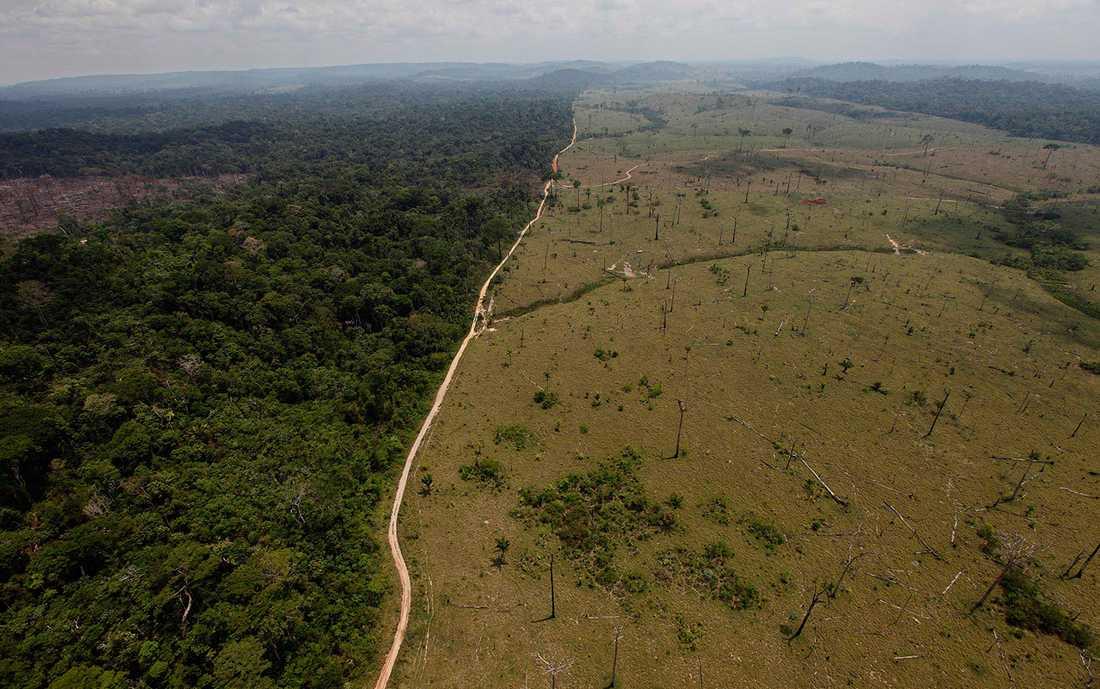 Arkivbild av skövlingens spår. Före Bolsonaros tillträde fanns ett stopp för skövlingen inom räckhåll. Efter valet byttes chefer för miljöskyddsmyndigheter ut, skogsskydd togs bort. En fri lejd för avverkningen.