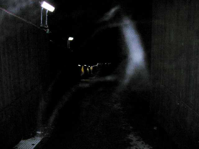 Bilden togs av en tunnelbanechaufför i Stockholm. Han fotade in i en tunnel som inte används längre.