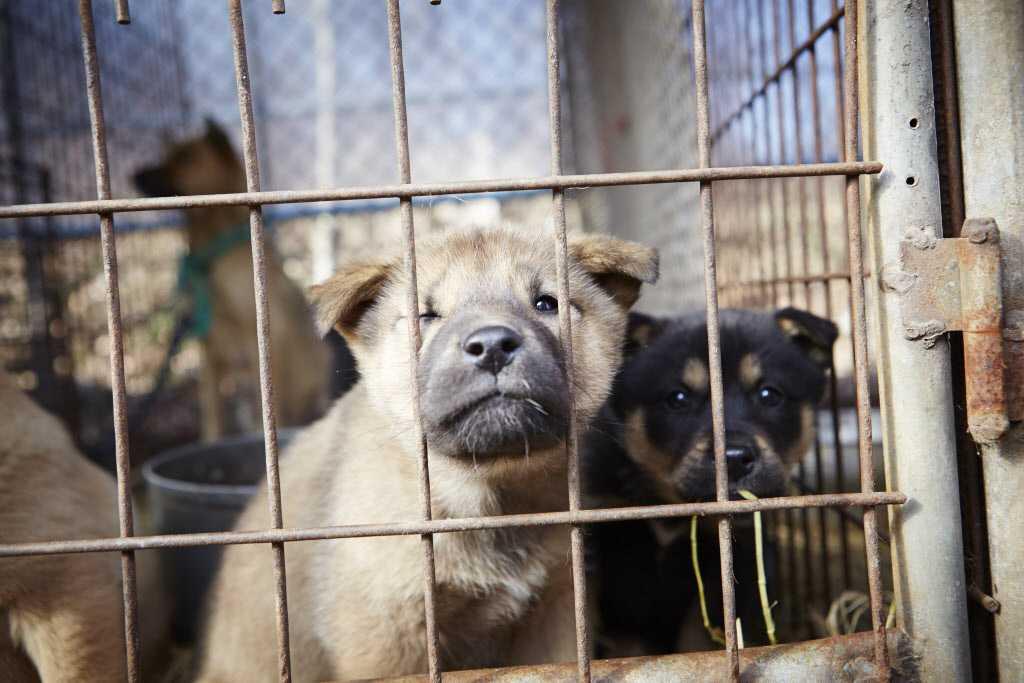 En man som slaktat hundar döms till böter.