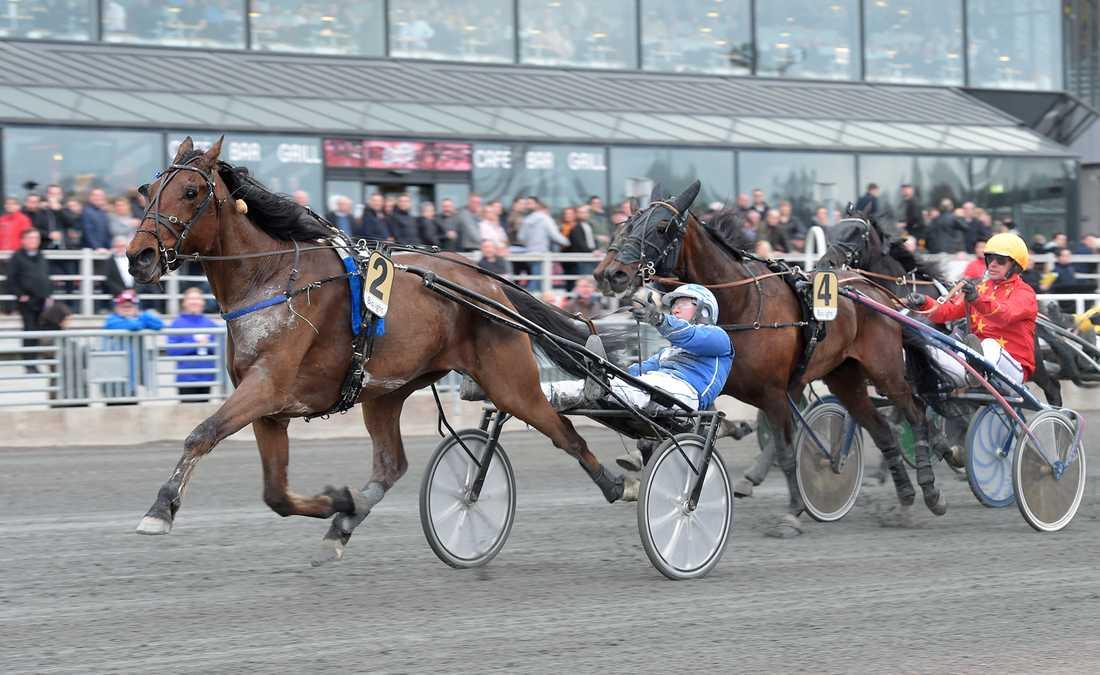Perfect Dynamite vid V75-finalen på Solvalla med Rikard N Skoglund i sulkyn.