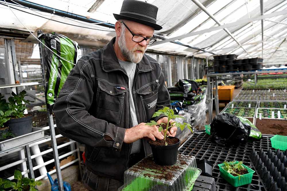 Efter planteringen vattna – så att jorden blir fuktig, sjunker ihop och sluter tätt kring plantans rötter.