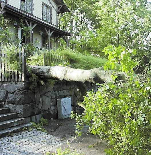 Blixtar och kraftig vind orsakade förödelse i Vitabergsparken i Stockholm i går. Ett antal hundägare, som befann sig i hundrastgården, tvingades fly.