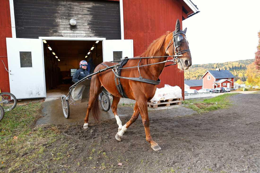 Nimbus C.D. på gården i Sundsvall tillsammans med Oskar Florhed.