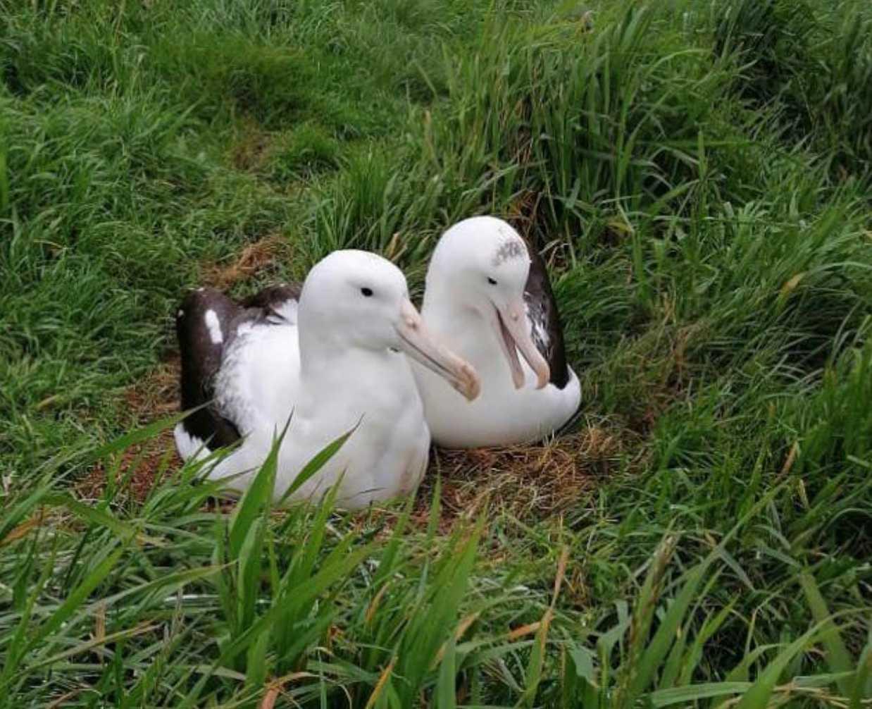 New Zeeland Department of Conservation