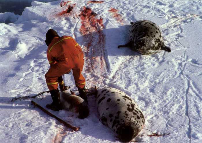 Norska säljägare på Grönland.