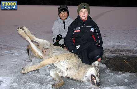Oscar, 10, och bästisen Victor hittade en varg fastfrusen i isen.