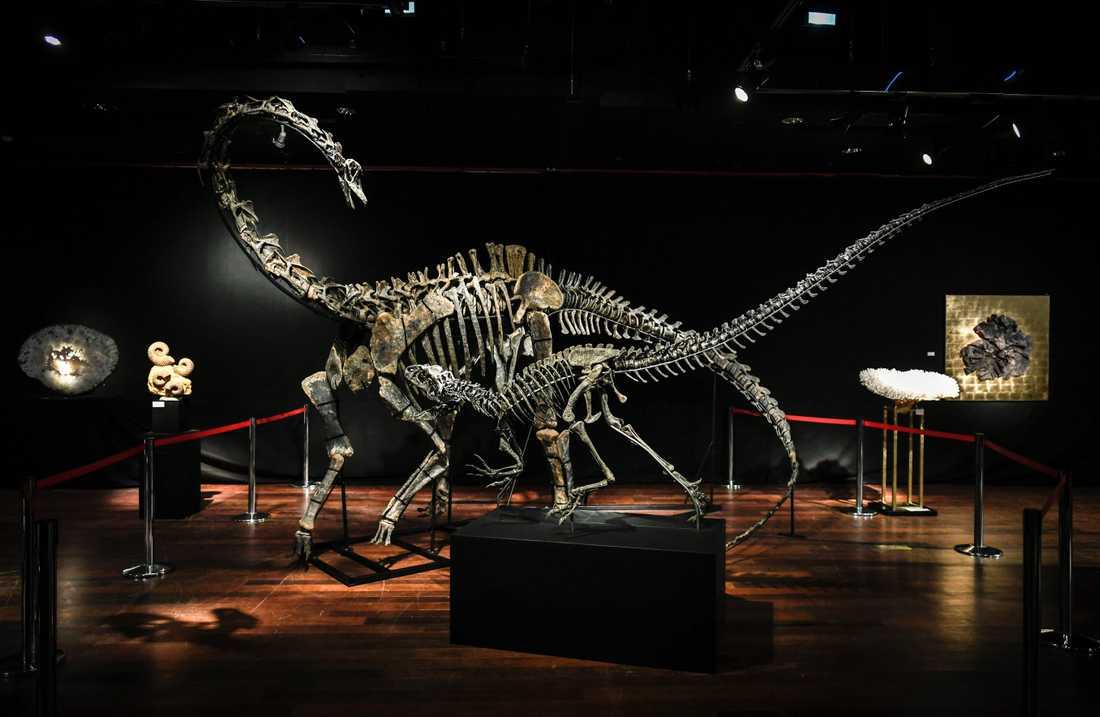 Dinosaurieskeletten som är till salu.