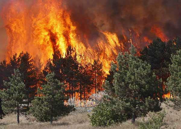 Skogen brinner utanför georgiska staden Gori efter striderna.