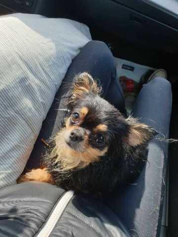 Äntligen är Hailey, 2,5 år, återförenad med sin ägare.