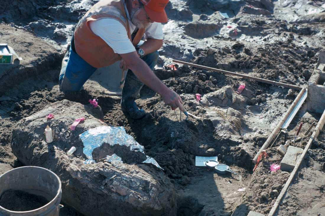 Utgrävningarna i Kalifornien.