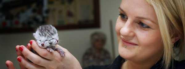 Kattungen sköttes om av sköterskan Sarah Kinder på kliniken.