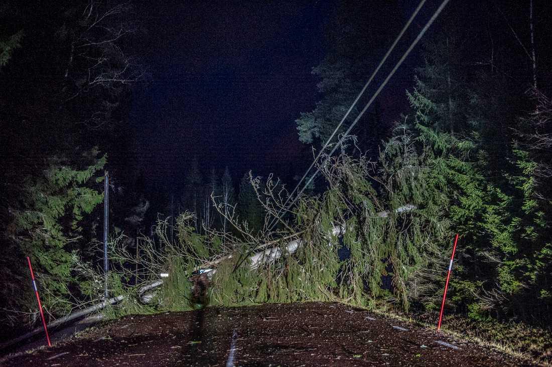 Träd har fallit över länsväg 735 i Brattfors och dragit med sig elledning.