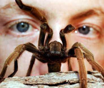 Spindlarna var stora och ludna.