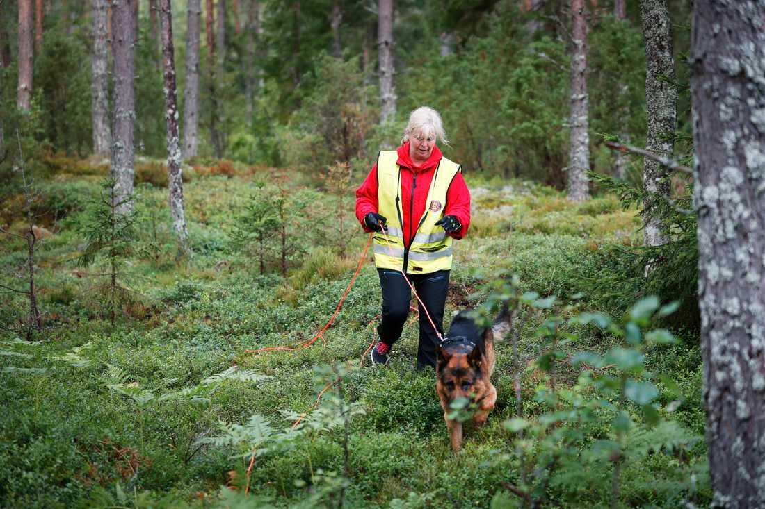 Kvinnan försvann när hon plockade svamp. Nu söks hon med hund och drönare.